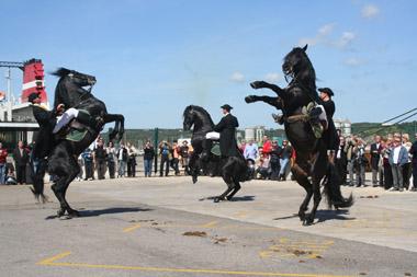 The magnificant Raca Menorquin horses entertain.